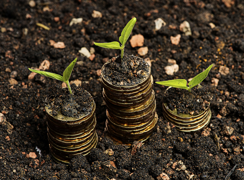 Coins growing plants in soil
