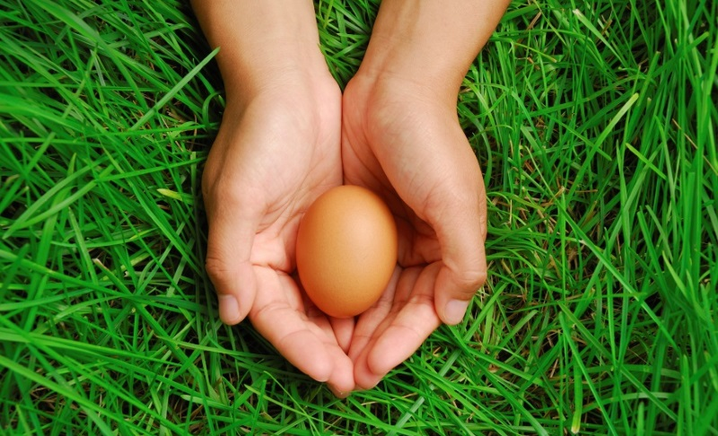 Hands holding egg on green grass