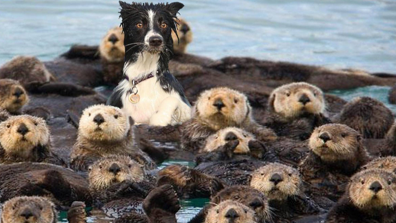 dog amongst otters