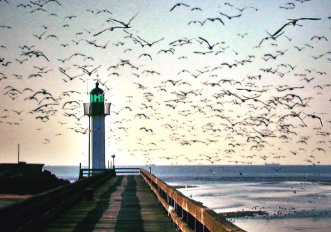 lighthouse sunset birds