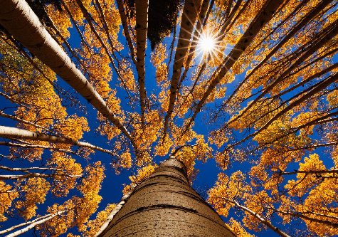 tree-view