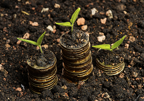 coins_growing_plants_in_soil