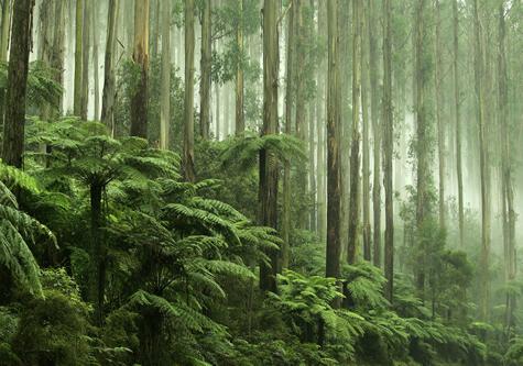green_rainforest_tall_trees