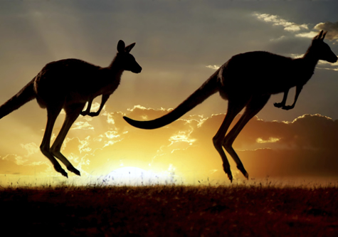 kangaroos_in_sunset